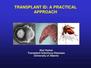 TRANSPLANT ID: A PRACTICAL APPROACH