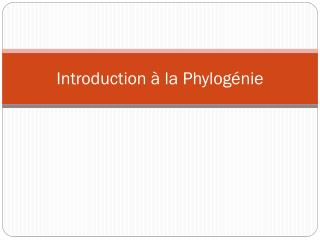 Introduction à la Phylogénie