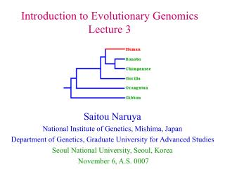 Saitou Naruya National Institute of Genetics, Mishima, Japan
