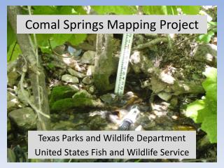 Comal Springs Mapping Project