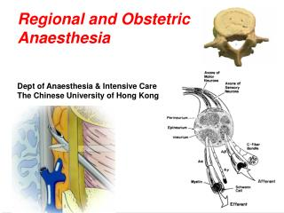 Regional and Obstetric Anaesthesia