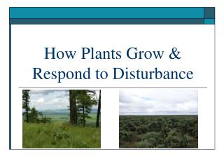 How Plants Grow & Respond to Disturbance