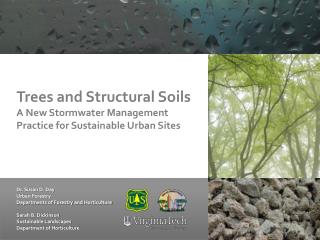 Trees and Structural Soils  A New Stormwater Management Practice for Sustainable Urban Sites