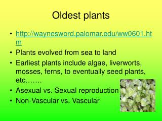 Oldest plants