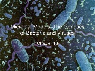 Microbial Models: The Genetics of Bacteria and Viruses