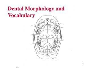 Dental Morphology and Vocabulary