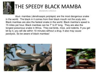 THE SPEEDY BLACK MAMBA
