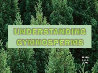 UNDERSTANDING GYMNOSPERMS