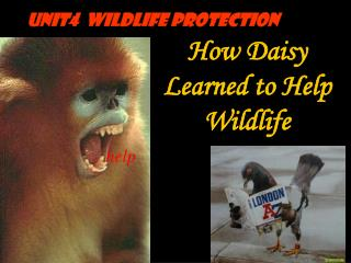 How Daisy Learned to Help     Wildlife