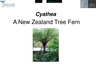 A New Zealand Tree Fern