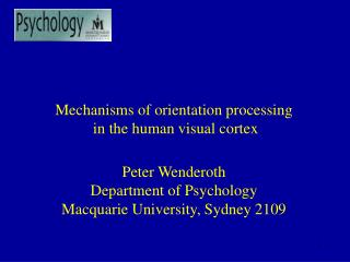 Mechanisms of orientation processing  in the human visual cortex