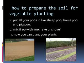 how to prepare the soil for vegetable planting