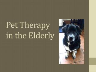Pet Therapy  in the Elderly