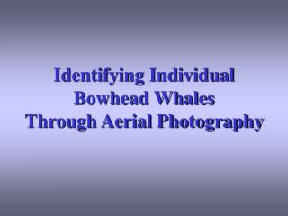 Identifying Individual Bowhead Whales Through Aerial Photography