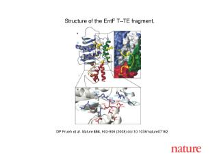 DP Frueh  et al. Nature 454 , 903-906 (2008) doi:10.1038/nature07162