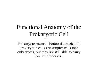 Functional Anatomy of the Prokaryotic Cell