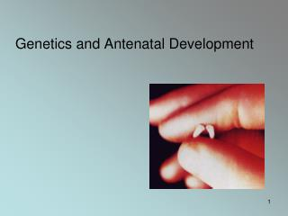 Genetics and Antenatal Development