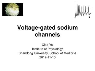 Voltage-gated sodium channels