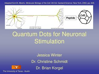 Quantum Dots for Neuronal Stimulation