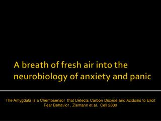 A breath of fresh air into the neurobiology of anxiety and panic