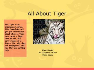 All About Tiger