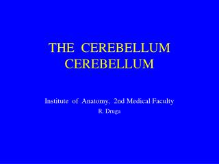 THE  CEREBELLUM CEREBELLUM