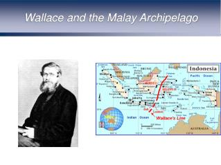 Wallace and the Malay Archipelago