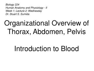 Biology 224 Human Anatomy and Physiology - II Week 1; Lecture 2; Wednesday Dr. Stuart S. Sumida