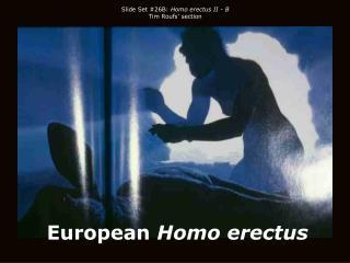 European Homo erectus