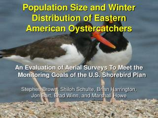 Population Size and Winter Distribution of Eastern  American Oystercatchers