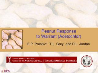 Peanut Response to Warrant (Acetochlor)