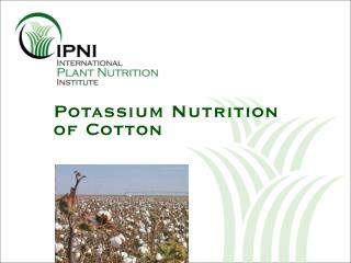 Potassium Nutrition of Cotton