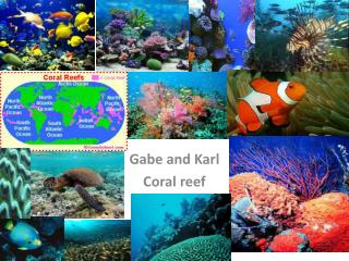 Gabe and Karl  Coral reef