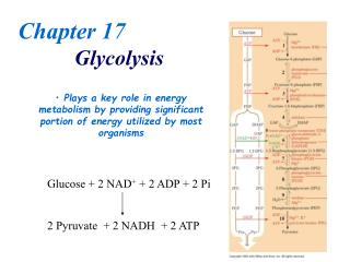 Chapter 17 Glycolysis