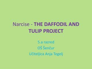 Narcise -  THE DAFFODIL AND TULIP PROJECT