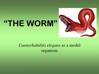 """THE WORM"""