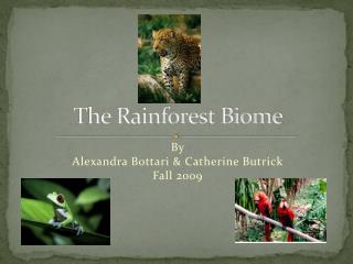 The Rainforest Biome