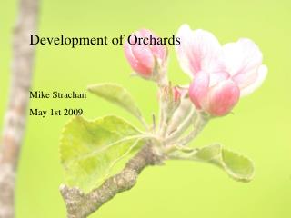 Development of Orchards Mike Strachan May 1st 2009