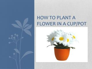 How to plant a flower in a cup/pot