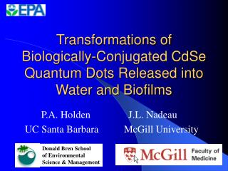 Transformations of Biologically-Conjugated CdSe Quantum Dots Released into Water and Biofilms
