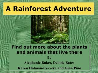 A Rainforest Adventure