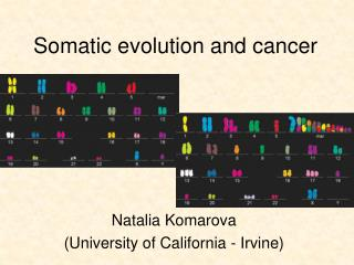 Somatic evolution and cancer