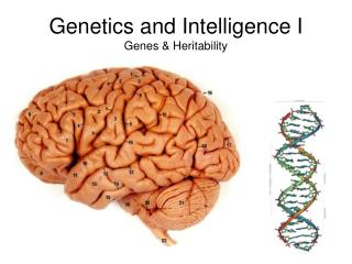 Genetics and Intelligence I Genes & Heritability