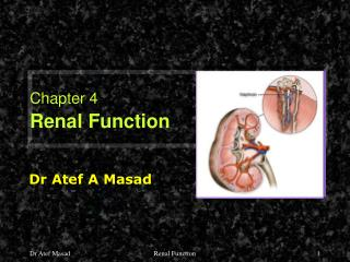 Chapter 4 Renal Function