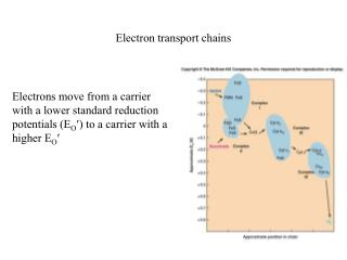 Electron transport chains
