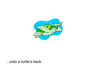 …onto a turtle's back.
