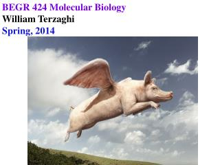 BEGR 424 Molecular Biology William Terzaghi Spring, 2014