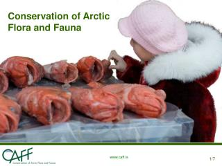 Conservation of Arctic Flora and Fauna