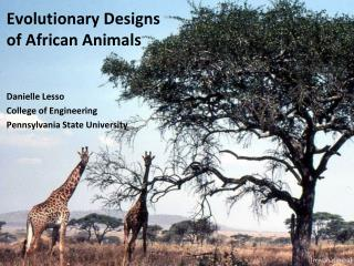 Evolutionary Designs  of African Animals