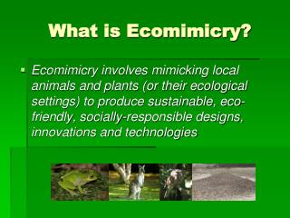 What is Ecomimicry?